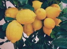 image_lemon